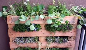 Local Plants Blog